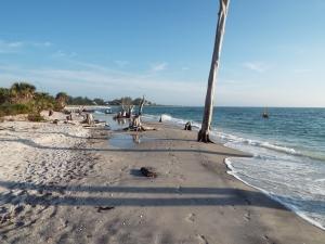 beach December 047